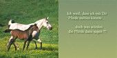 ich weiß, dass ich mit dir Pferde stehlen könnte ... doch was würden die Pferde dazu sagen