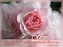 Blumen mögen zu blühen beginnen und ihren köstlichen Duft ausbreiten, wo immer du gehst (irischer Segenswunsch)