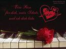 Eine Rose für Dich, mein Schatz, weil ich Dich liebe