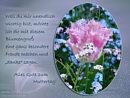 weil Du mir unendlich wichtig bist, möchte ich dir mit diesem Blumengruß eine ganz besondere Freude machen.