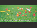 für Dich zum Geburtstag eine ganze Blumenwiese ...