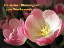 ein kleiner Blumengruß zum Wochenende