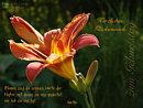 Herzlichen Gl�ckwunsch ... Blumen sind die sch�nsten Worte der Natur ...