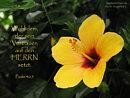 Wohl dem, der sein Vertrauen auf den Herrn setzt
