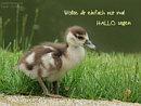 Wollte dir einfach nur mal hallo sagen