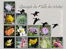 Oktoberwunsch: genieße die Fülle der Natur