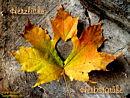 herzliche Herbstgrüße