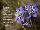 Blumen sind Boten Gottes, damit wir Menschen nicht vergessen, wie schön seine Schöpfung ist.