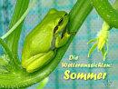 Die Wetteraussichten: Sommer