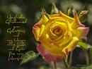 Herzlichen Glückwunsch zum Geburtstag und von Herzen alles Liebe und Gute fürs neue Lebensjahr