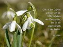 Geh in den Garten und höre auf die Stille ...