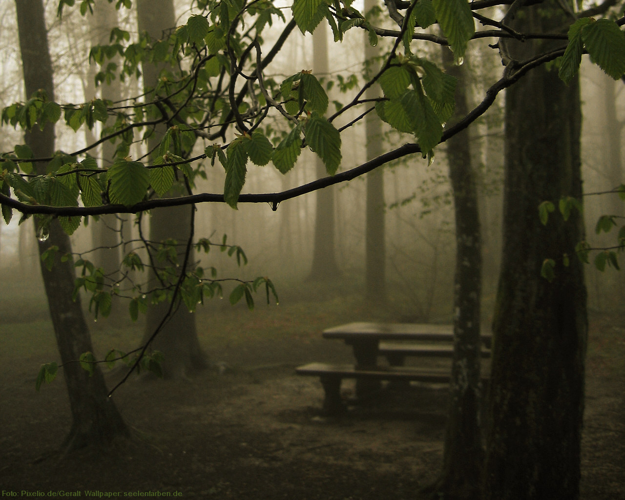 Wald Regen