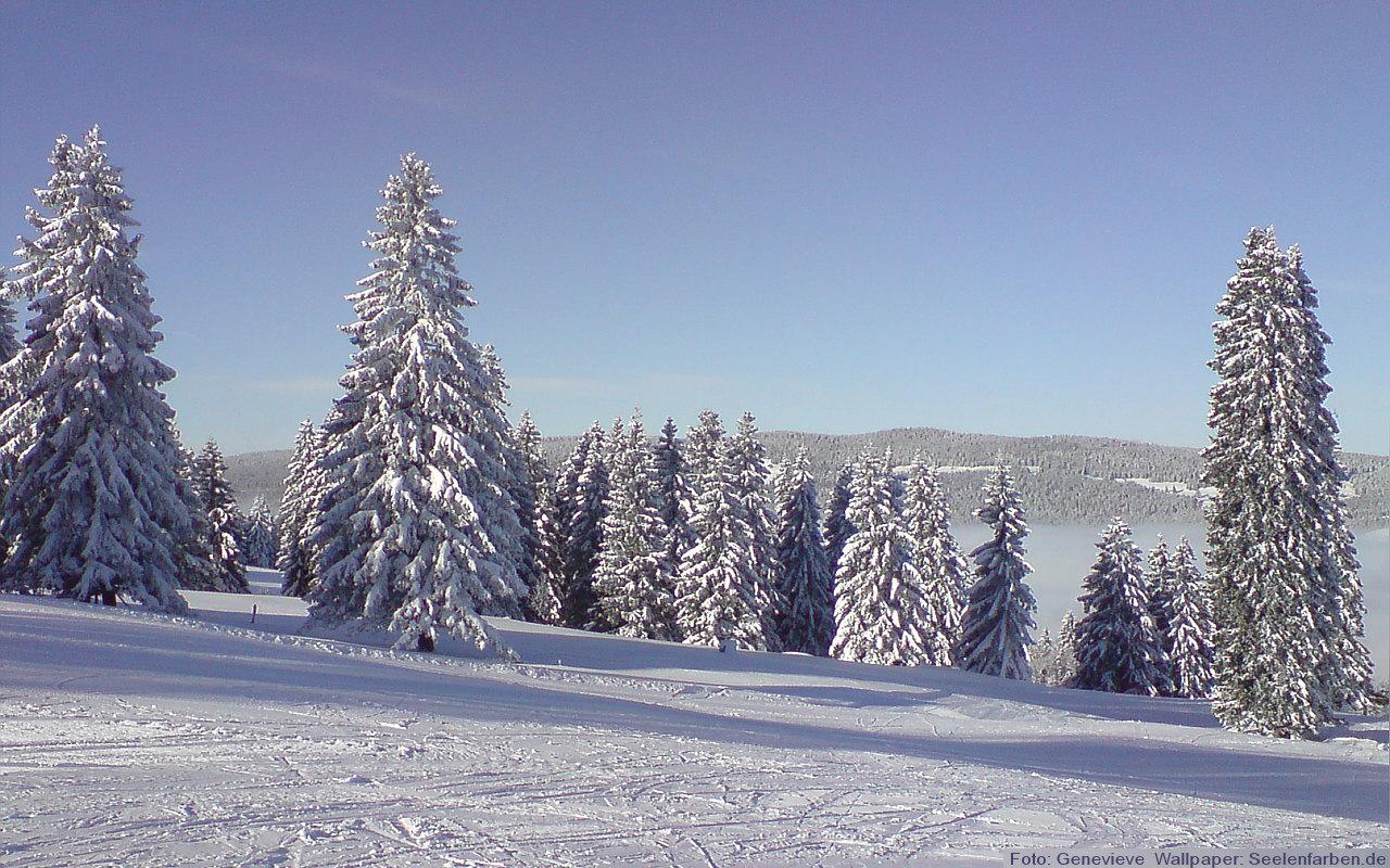 Winter Wald Schnee Schweiz Ski Rodel Urlaub Winterurlaub