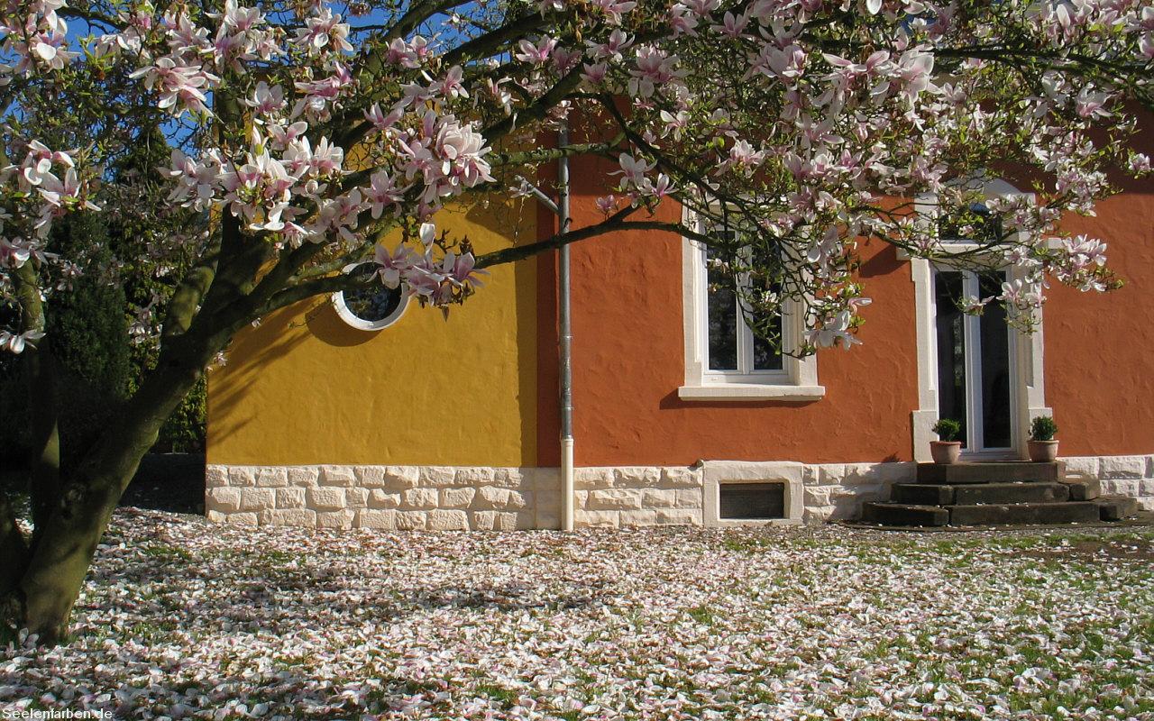 Magnolie Farbe war perfekt design für ihr haus design ideen