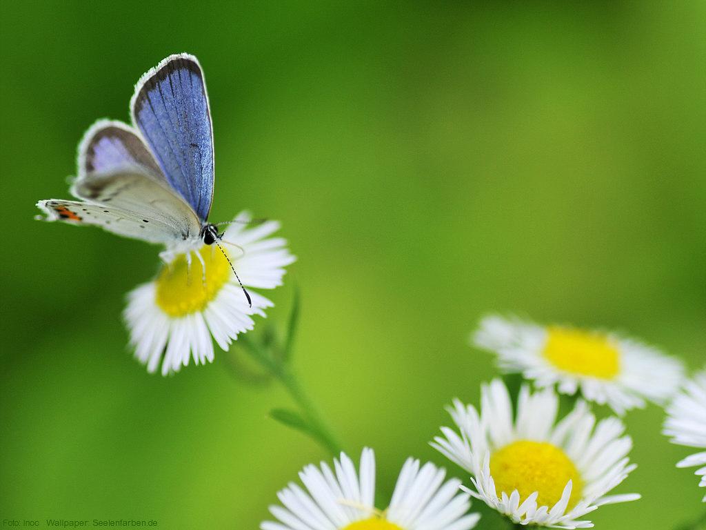 Wall Schmetterling Sommer Blume