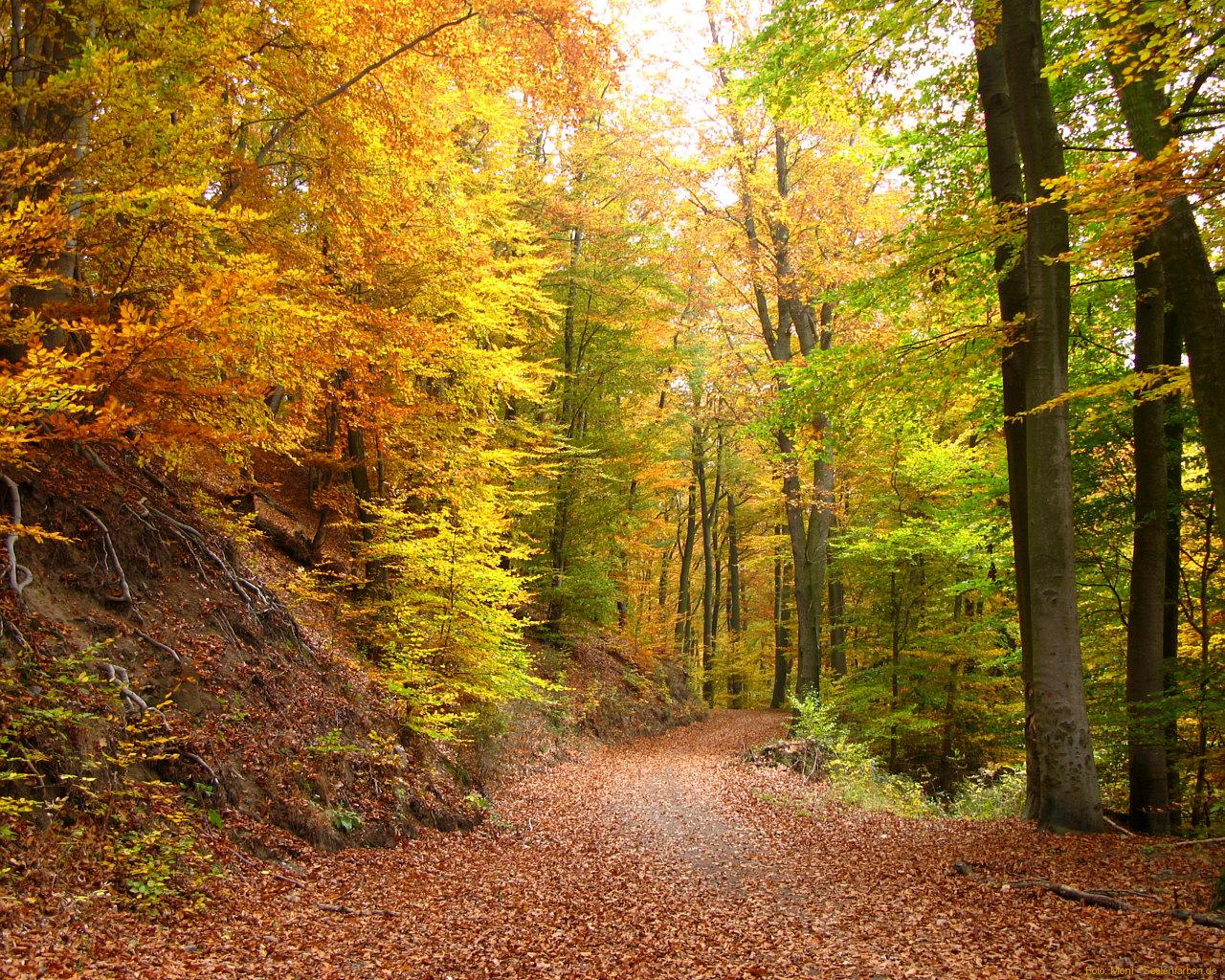 Wald Herbst Blätter Farben